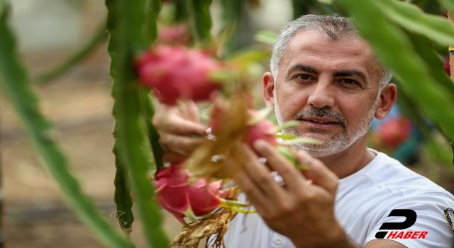 1,5 dönümlük serada ürettiği ejder meyvesinden yılda 80 bin lira kazanıyor