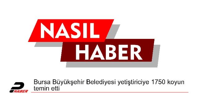 Bursa Büyükşehir Belediyesi yetiştiriciye 1750 koyun temin etti