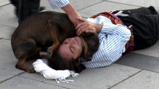 Rolü gereği yaralanıp yere düşen tiyatrocuya sokak köpeği yardım etmeye çalıştı
