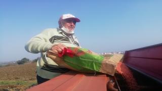 Manyas'ta hububat ekimi tamamlandı
