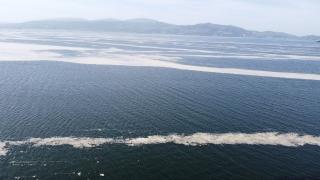 """Marmara Denizi'nin birçok noktasına yayılan """"deniz salyası"""" Bandırma Körfezi'ni de kapladı"""