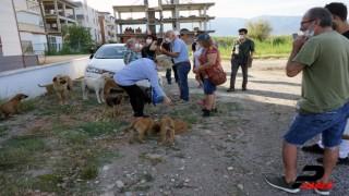 Sokak hayvanlarını besleyen kadını tehdit eden komşusu gözaltına alındı