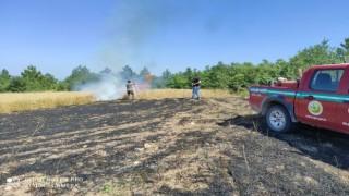 Osmaneli'nde 10 dönüm buğday ekili arazi yandı